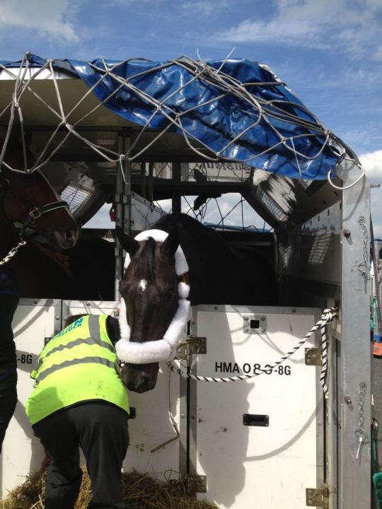 Canadian Olympic Dressage Horses Arrive safely at Stansted Airport